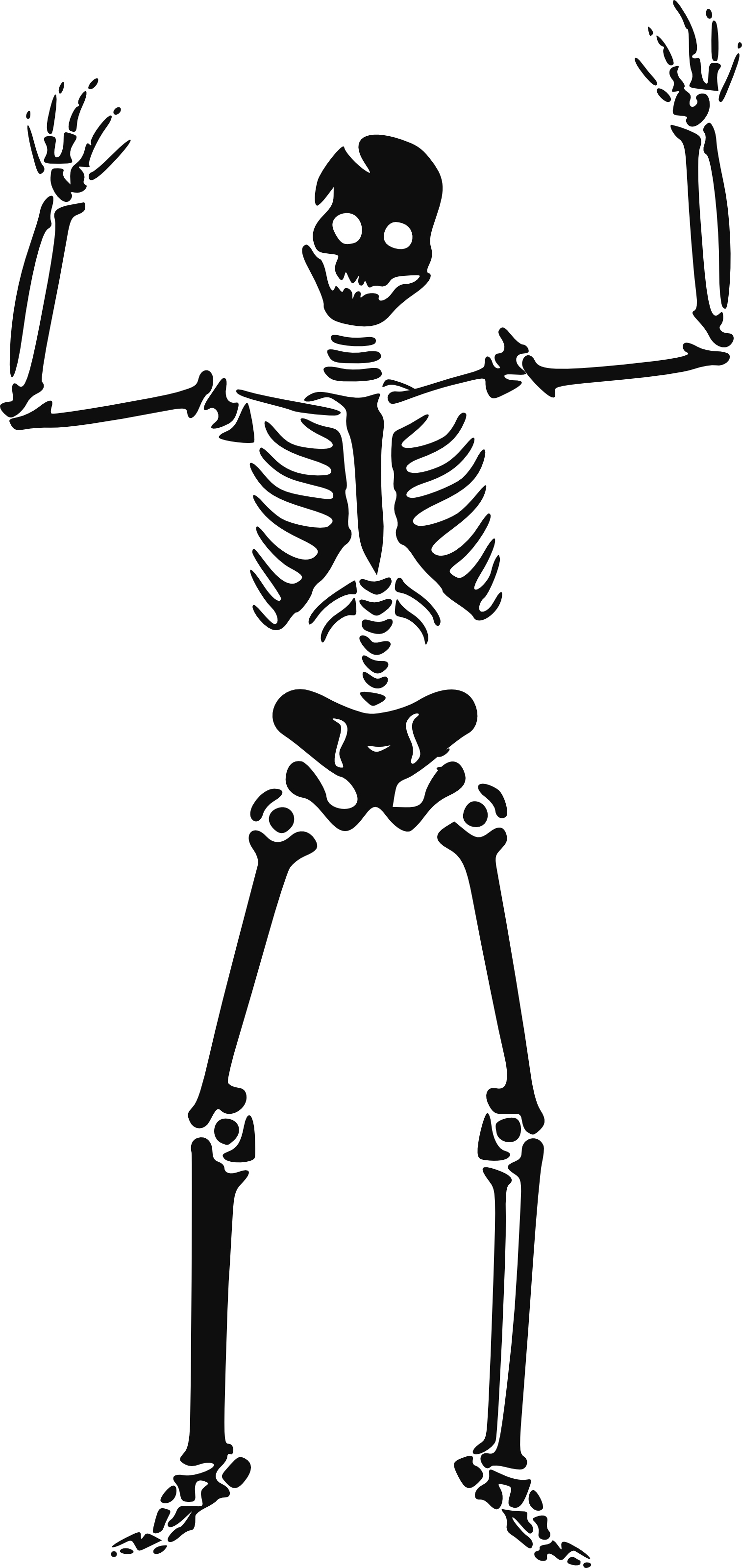 Free Pictures Of Skeletons For Kids Download Free Clip