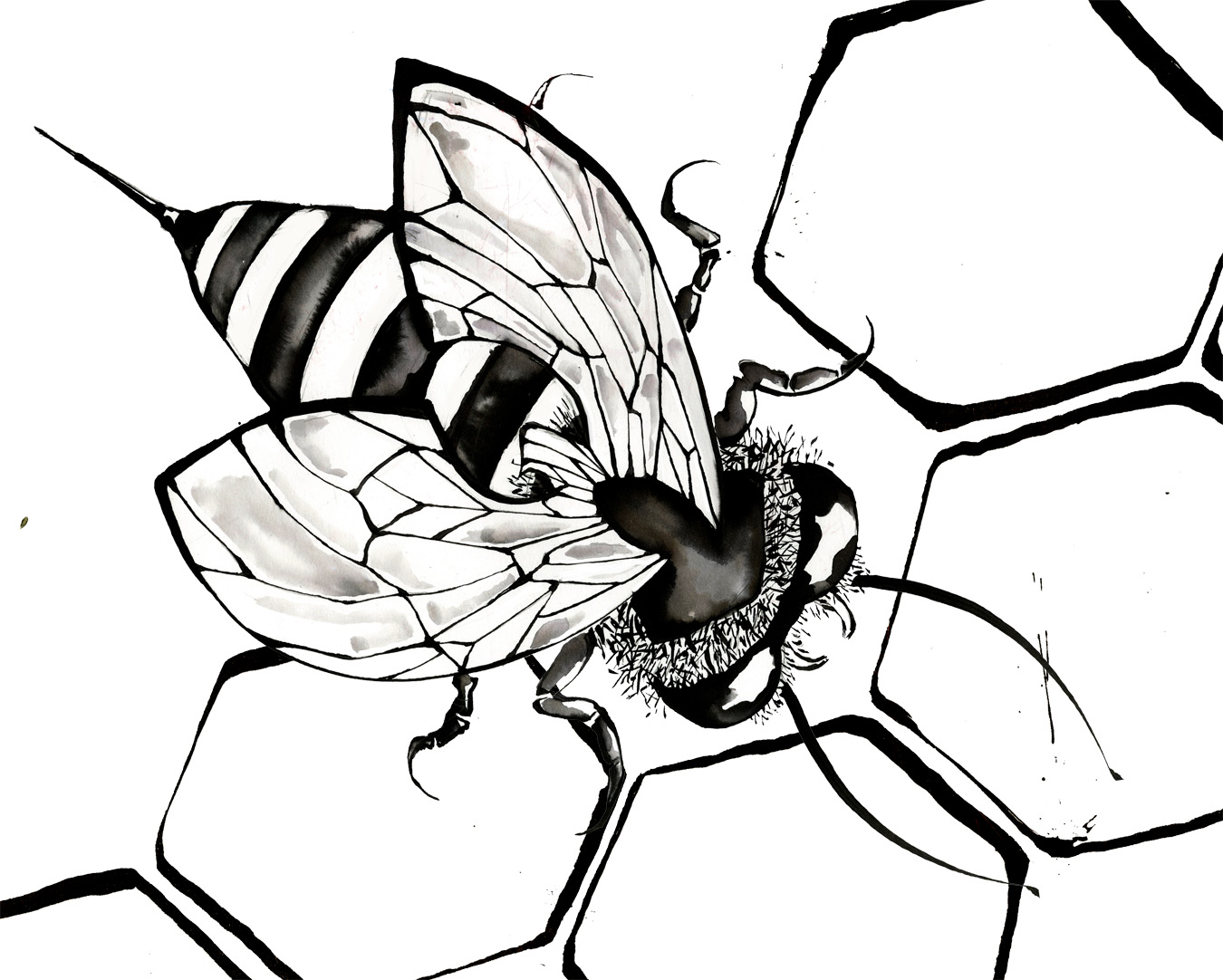 Free Bee Drawing Download Free Clip Art Free Clip Art On