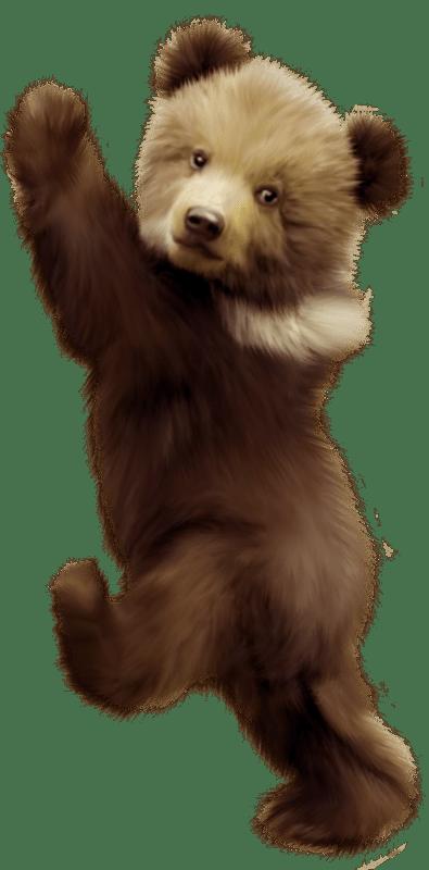 Polar Bear American Black Bear Bear Cub Portable Network