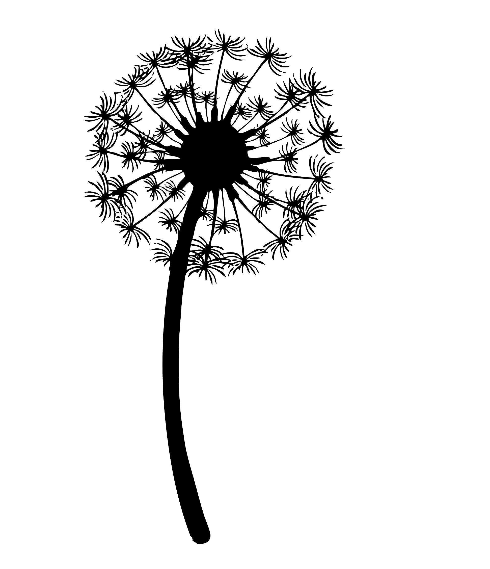 Drawing Clip Art Image Vector Graphics The Dandelion