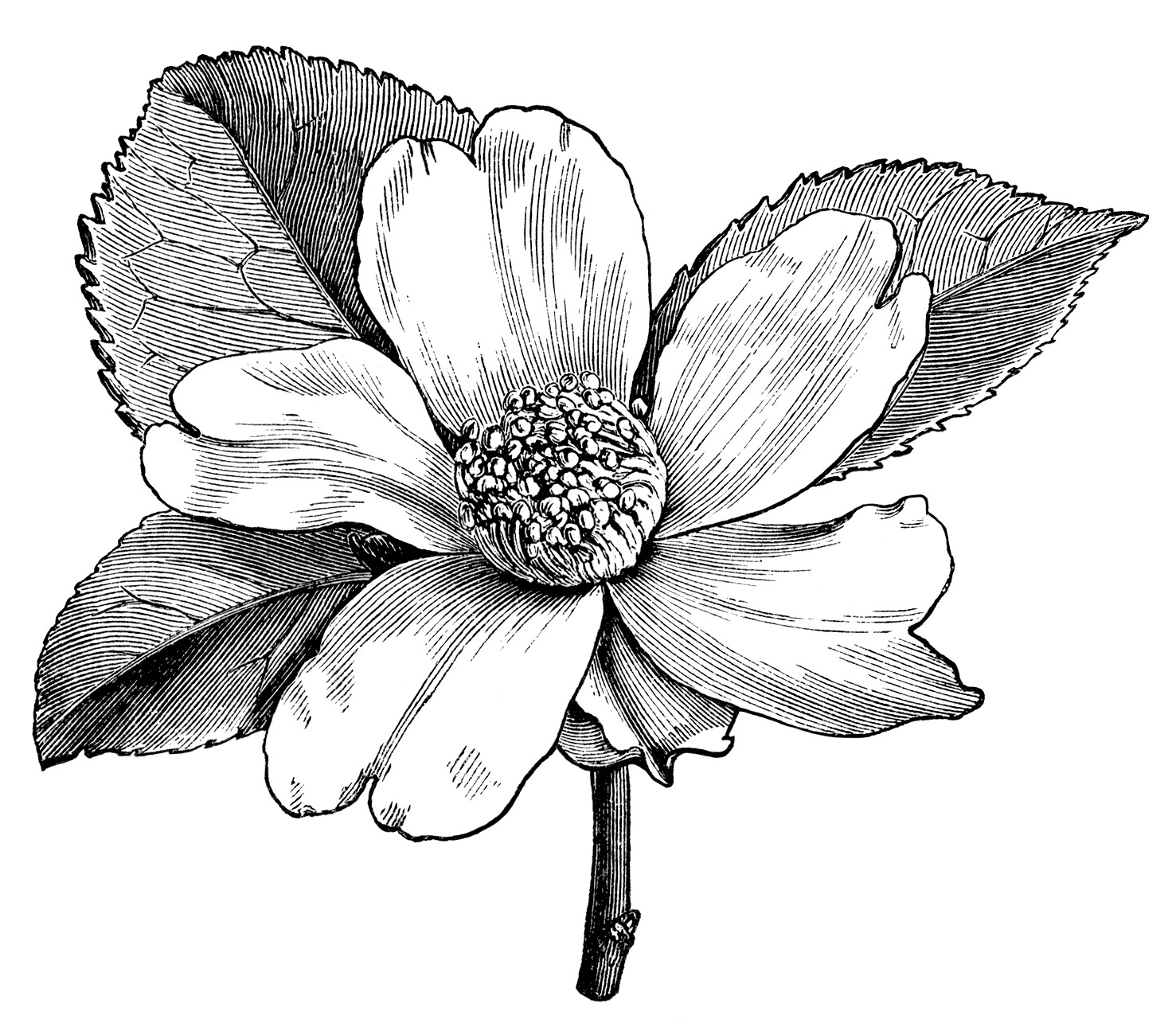 Free Antique Garden Cliparts Download Free Clip Art Free