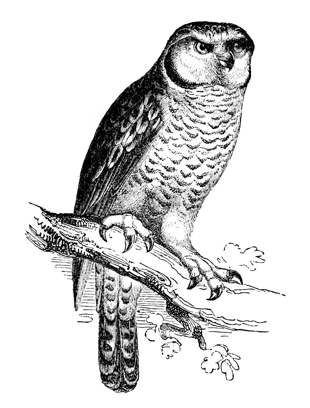Free History Owl Cliparts Download Free Clip Art Free