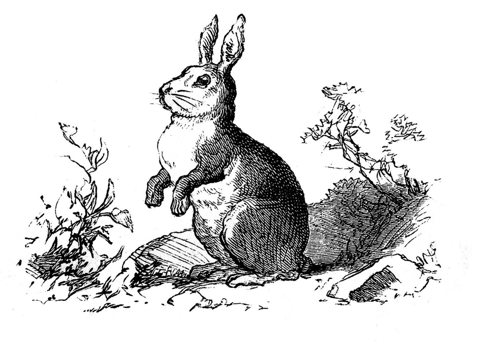 A Rabbit Cat