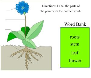Free Simple Plant Cliparts, Download Free Clip Art, Free Clip Art on Clipart Library
