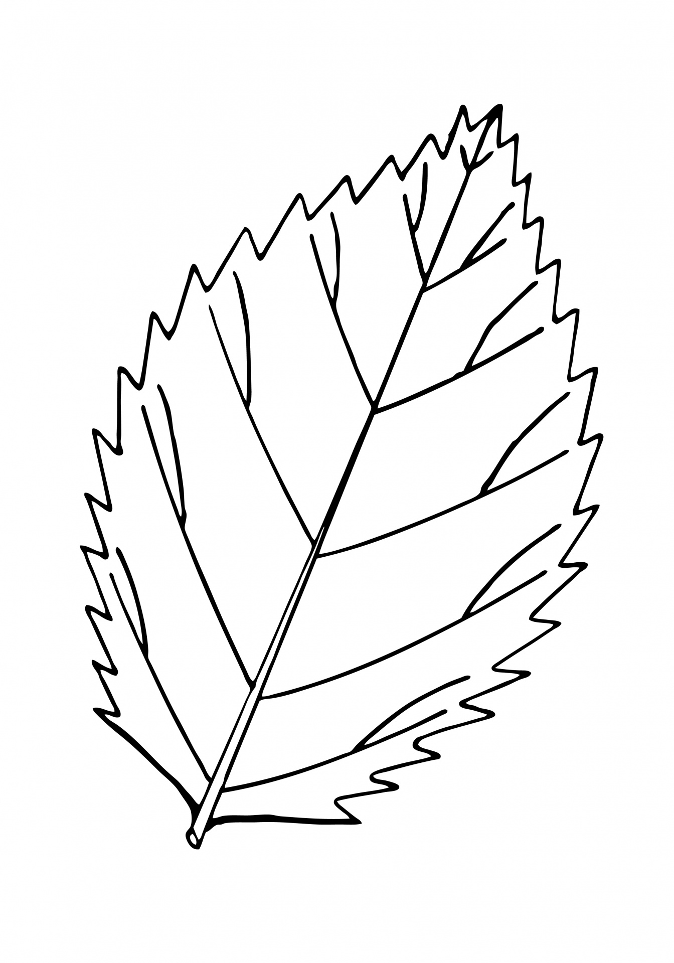 Free Leaf Cliparts Outline Download Free Clip Art Free