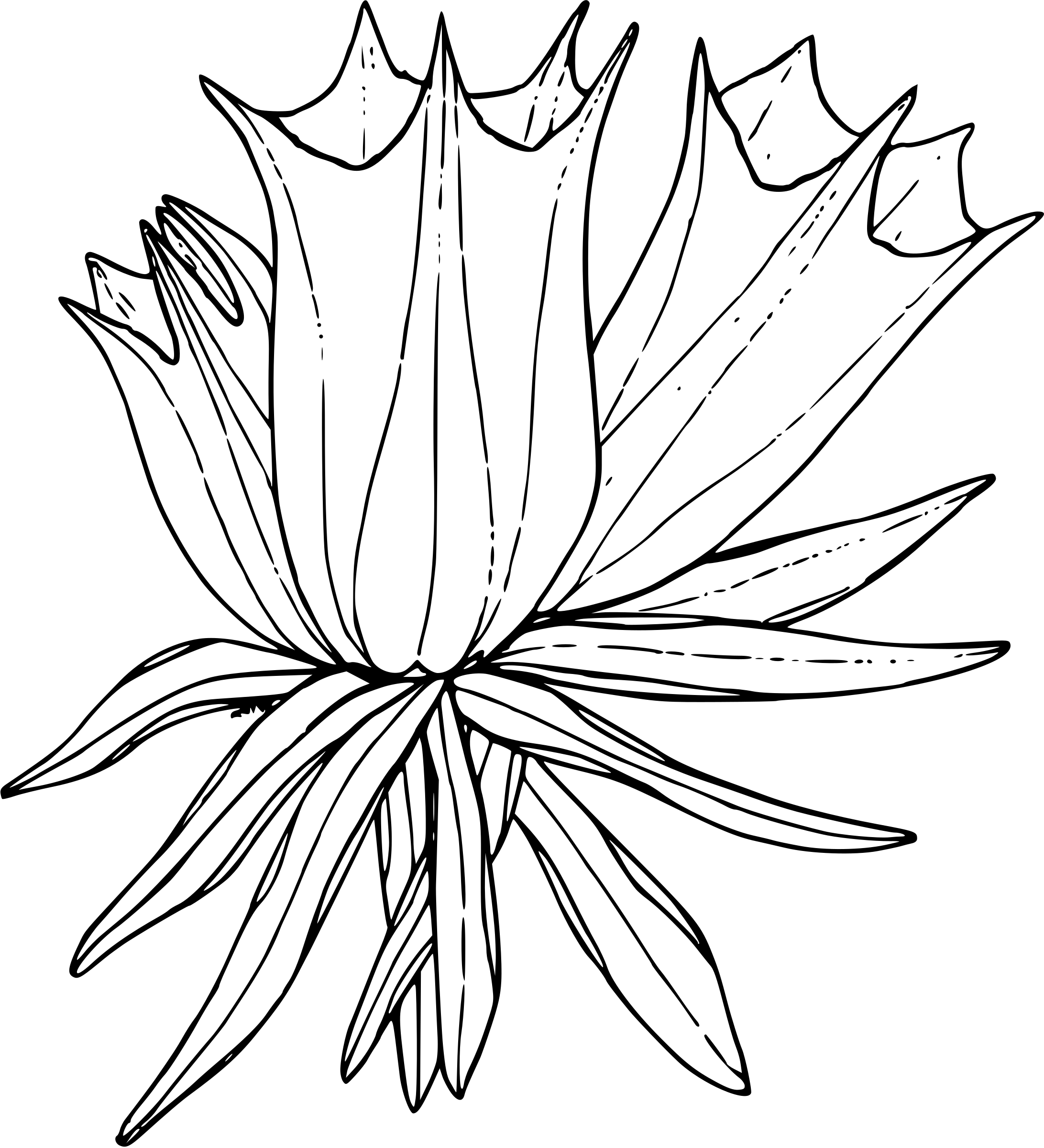 Free Arctic Flower Cliparts Download Free Clip Art Free