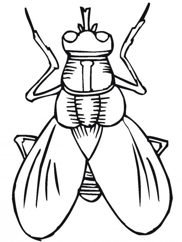 lightning bug clip art