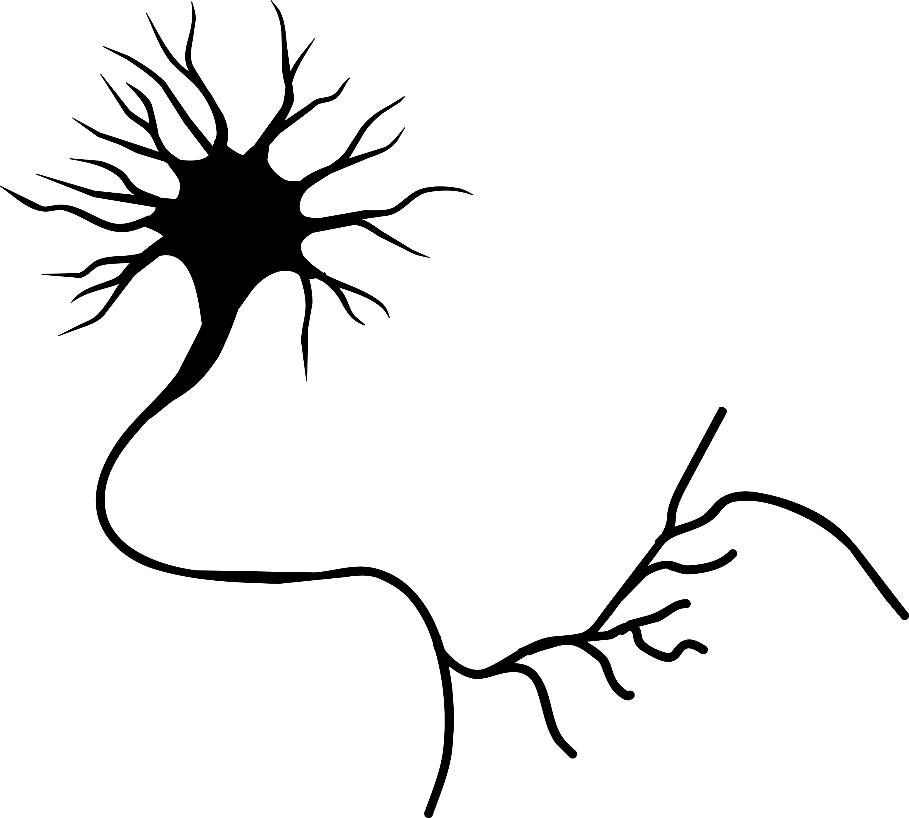 Free Neuron Cliparts Download Free Clip Art Free Clip Art On Clipart Library