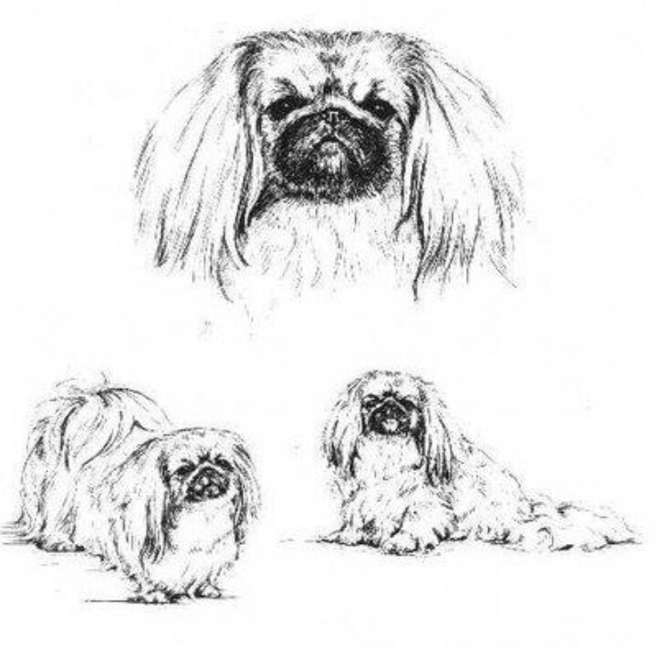 Free Pekingese Cliparts Download Free Clip Art Free Clip