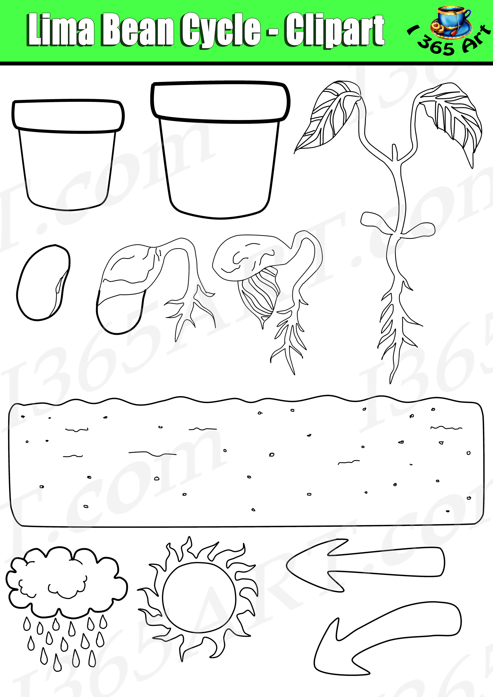 Plant Life Cycle Clipart