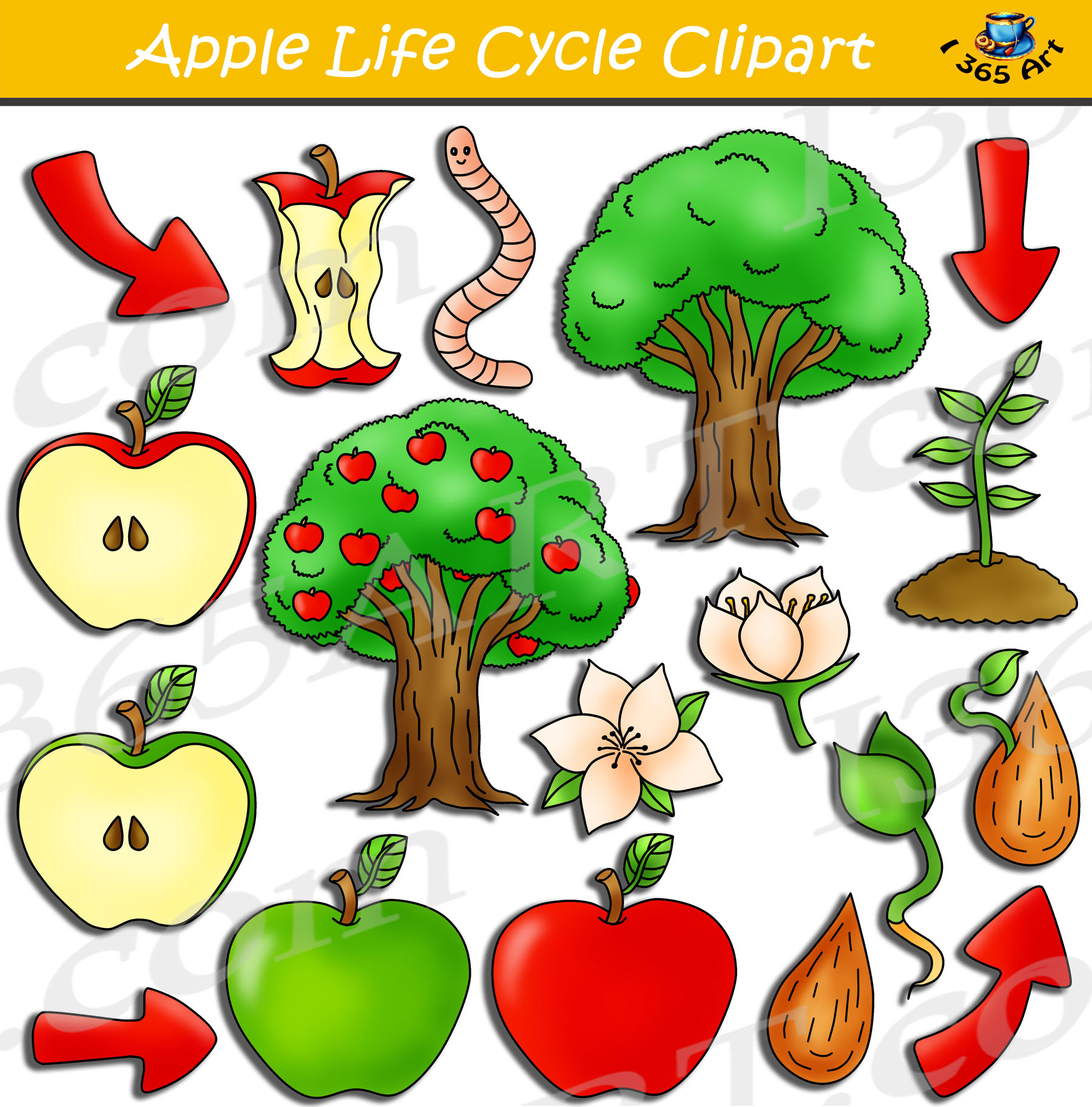 Apple Life Cycle Clipart Bundle Pack