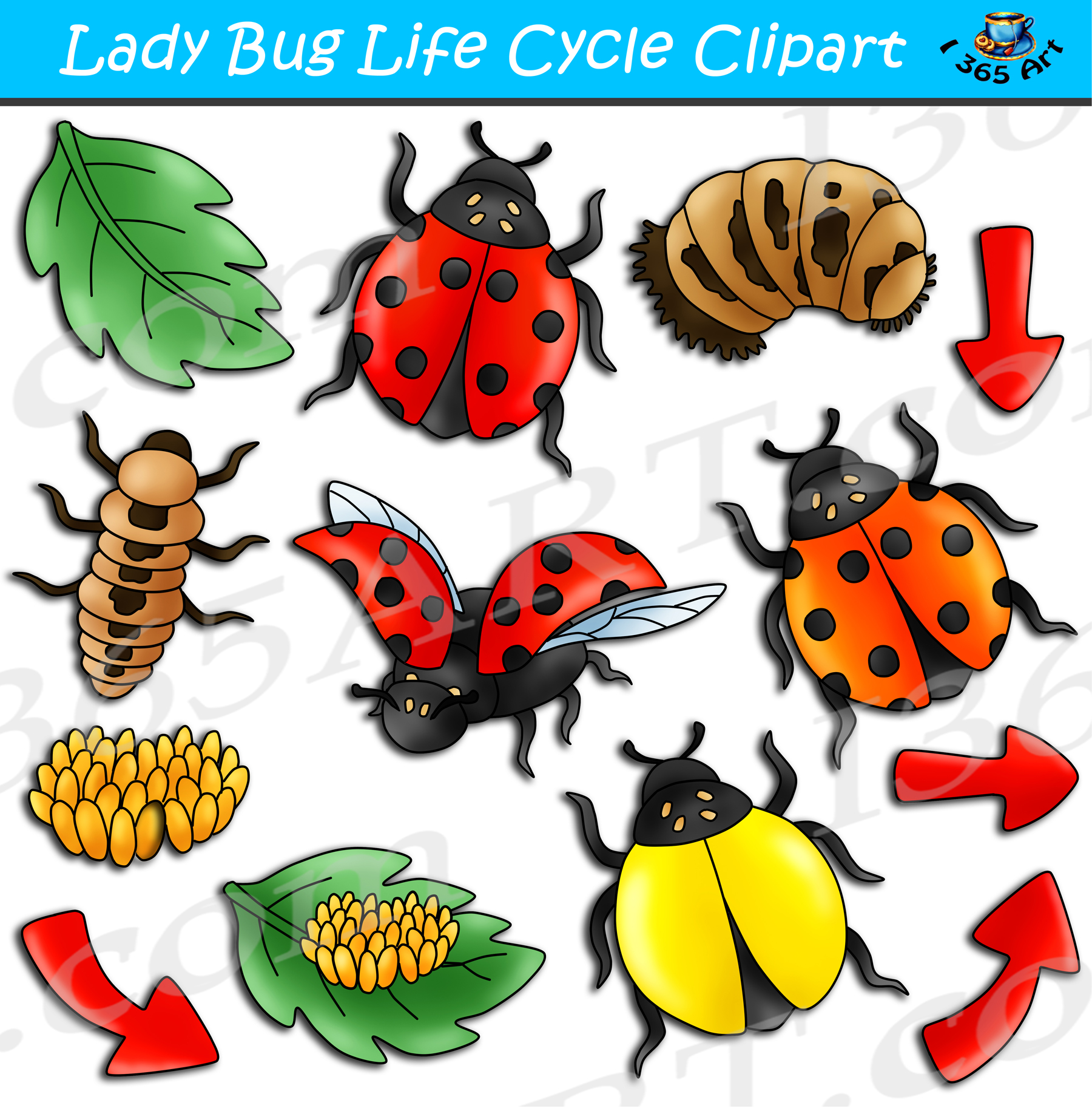 Ladybug Life Cycle Clipart Bundle Clipart 4 School