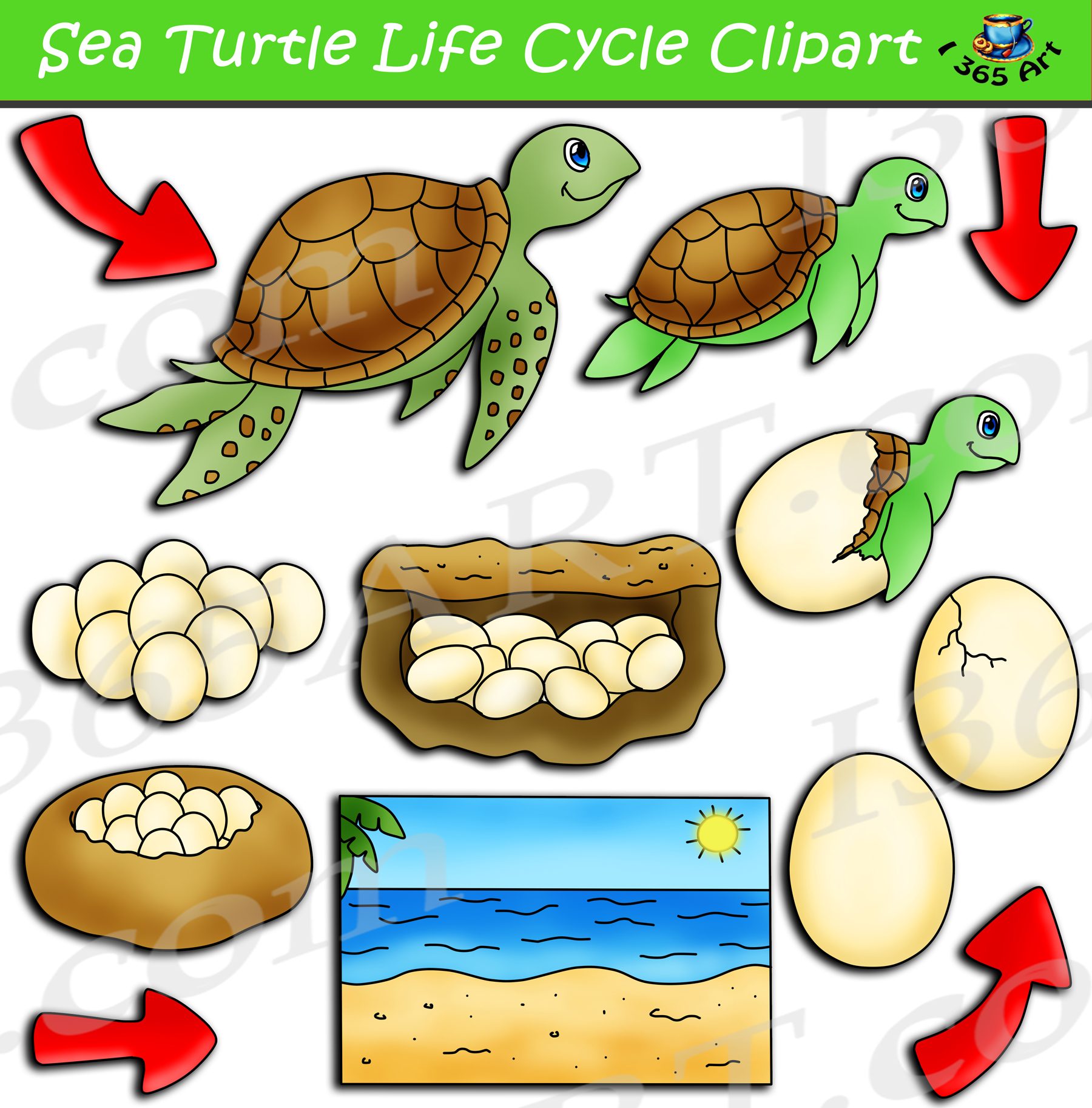 Sea Turtle Life Cycle Clipart Pack