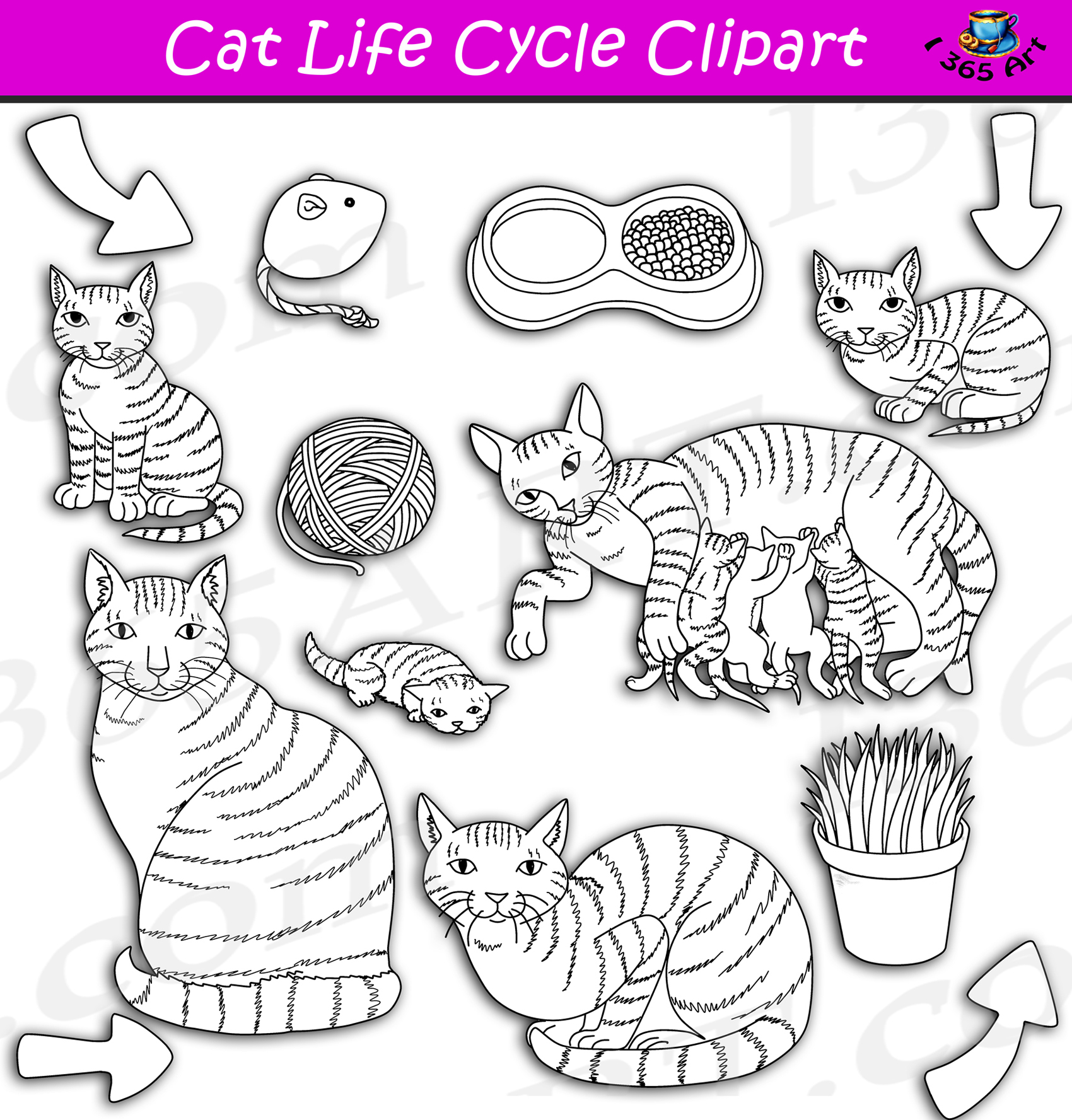 Cat Life Cycle Clipart Set Download
