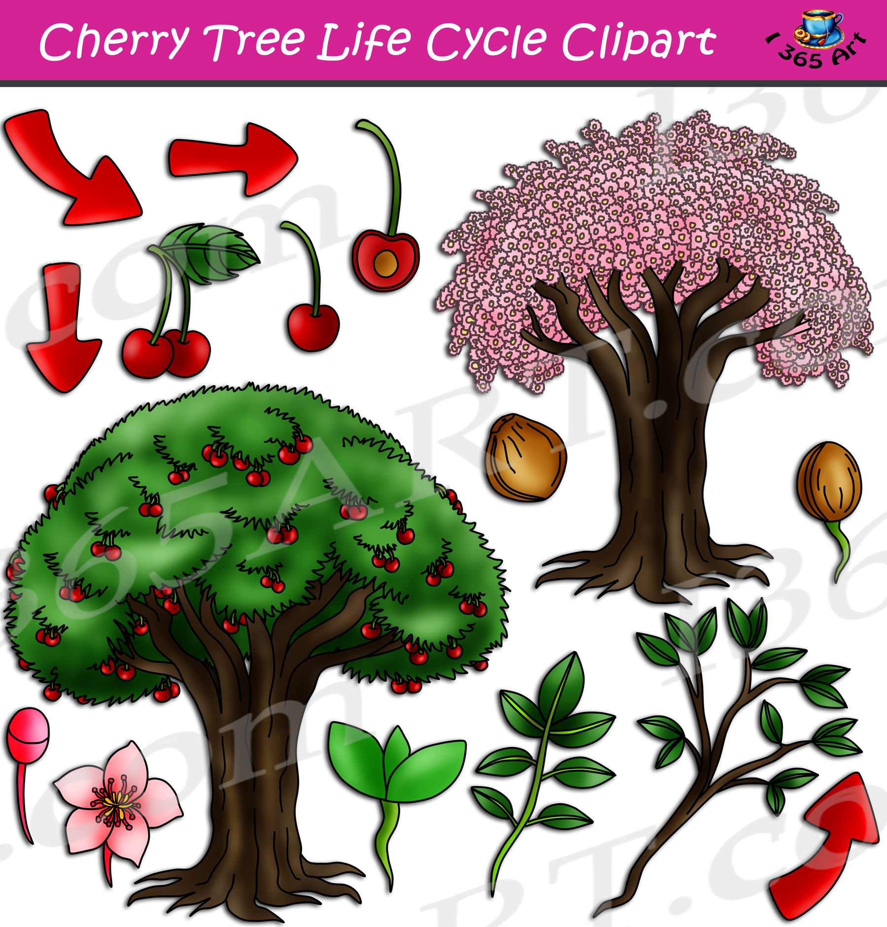 Cherrytree Life Cycle Clipart Set Download