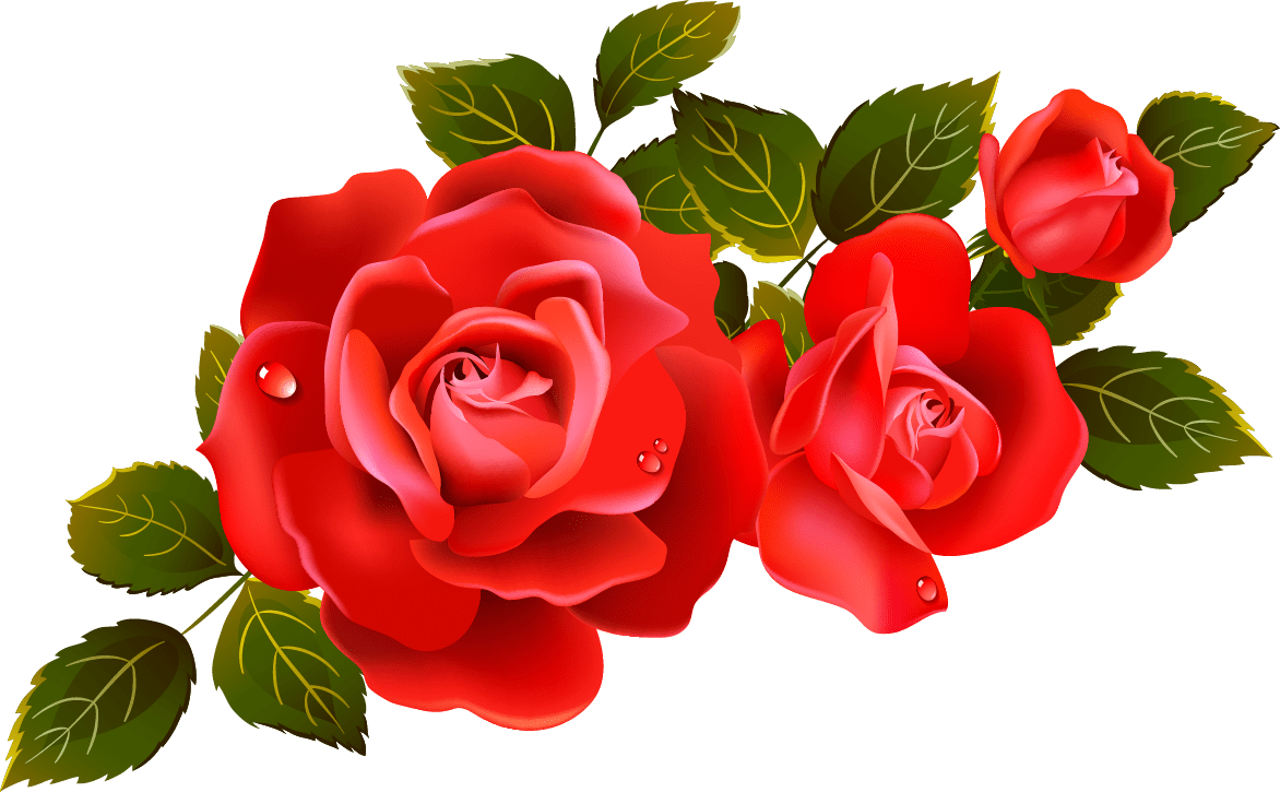 Library Of Roses Flower Vector Transparent Stock Png Files