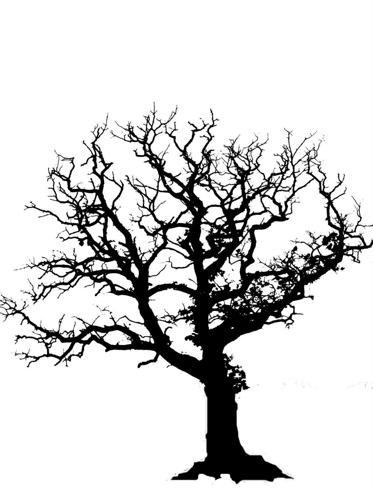 Best Oak Tree Silhouette