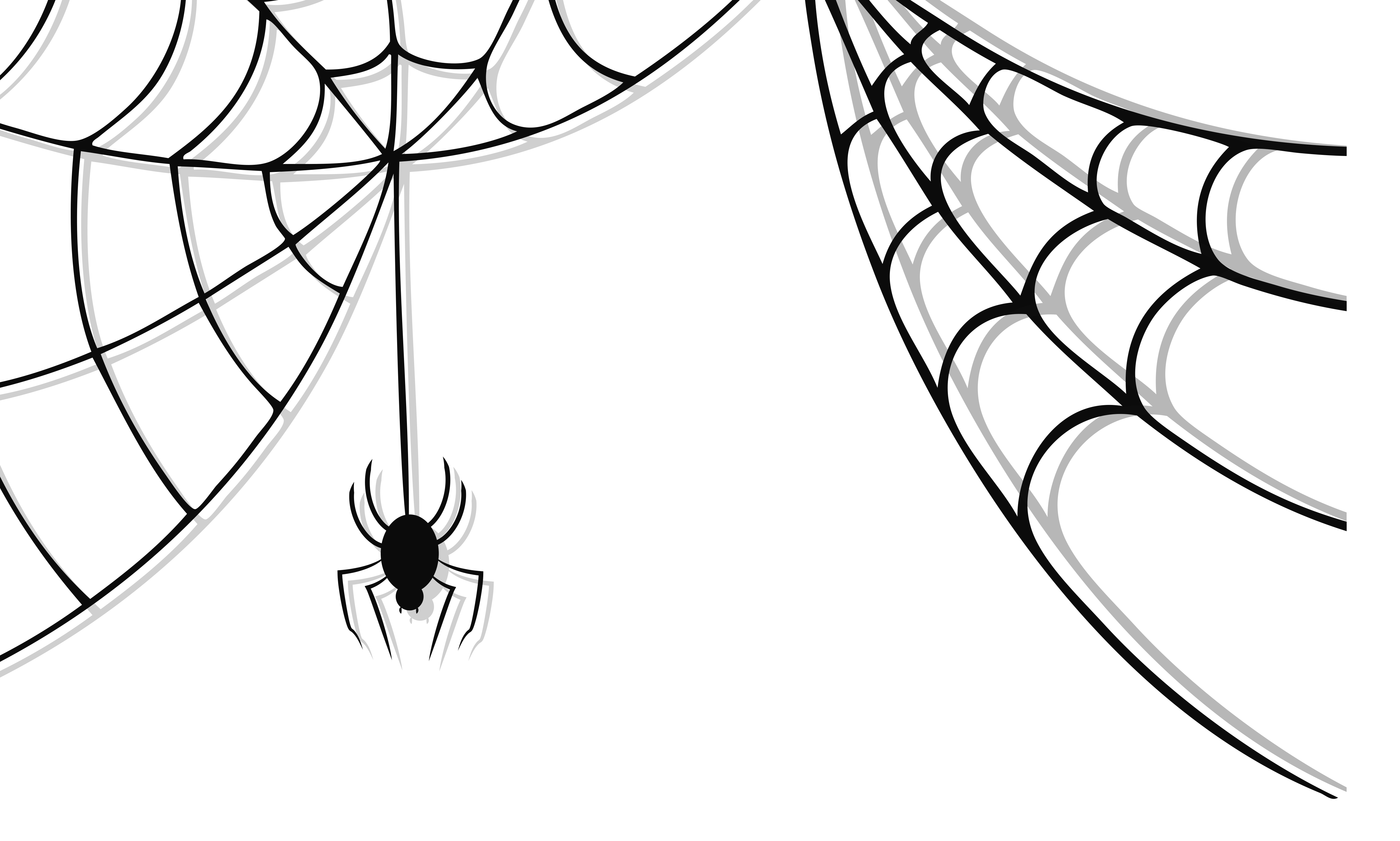 Best Spider Web