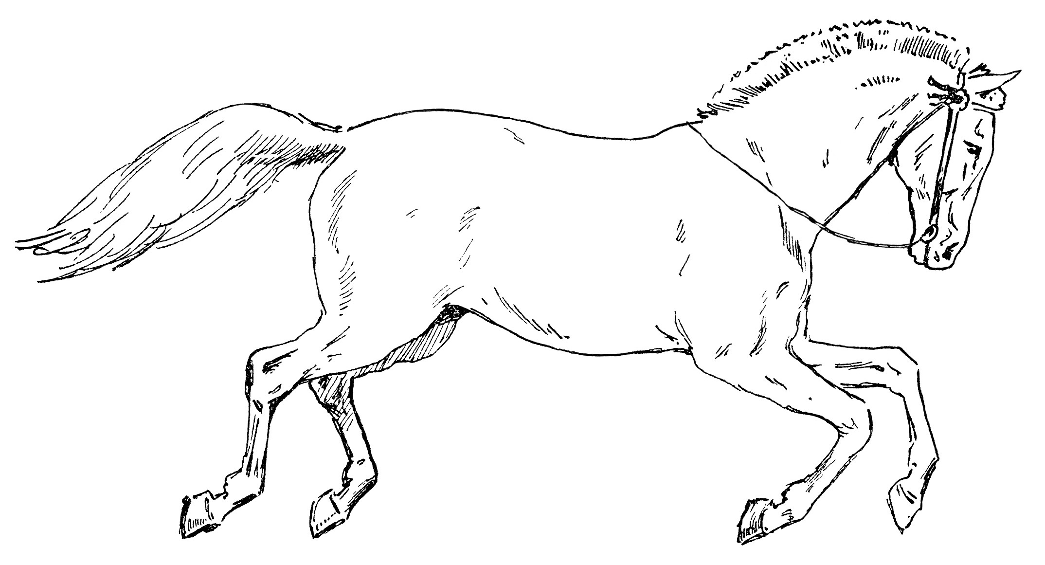 Free Horse Clip Art Pictures