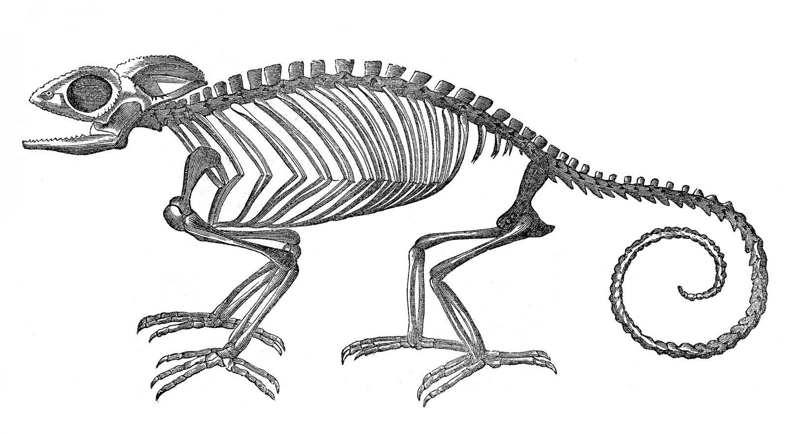 Free Skeleton Clip Art Pictures