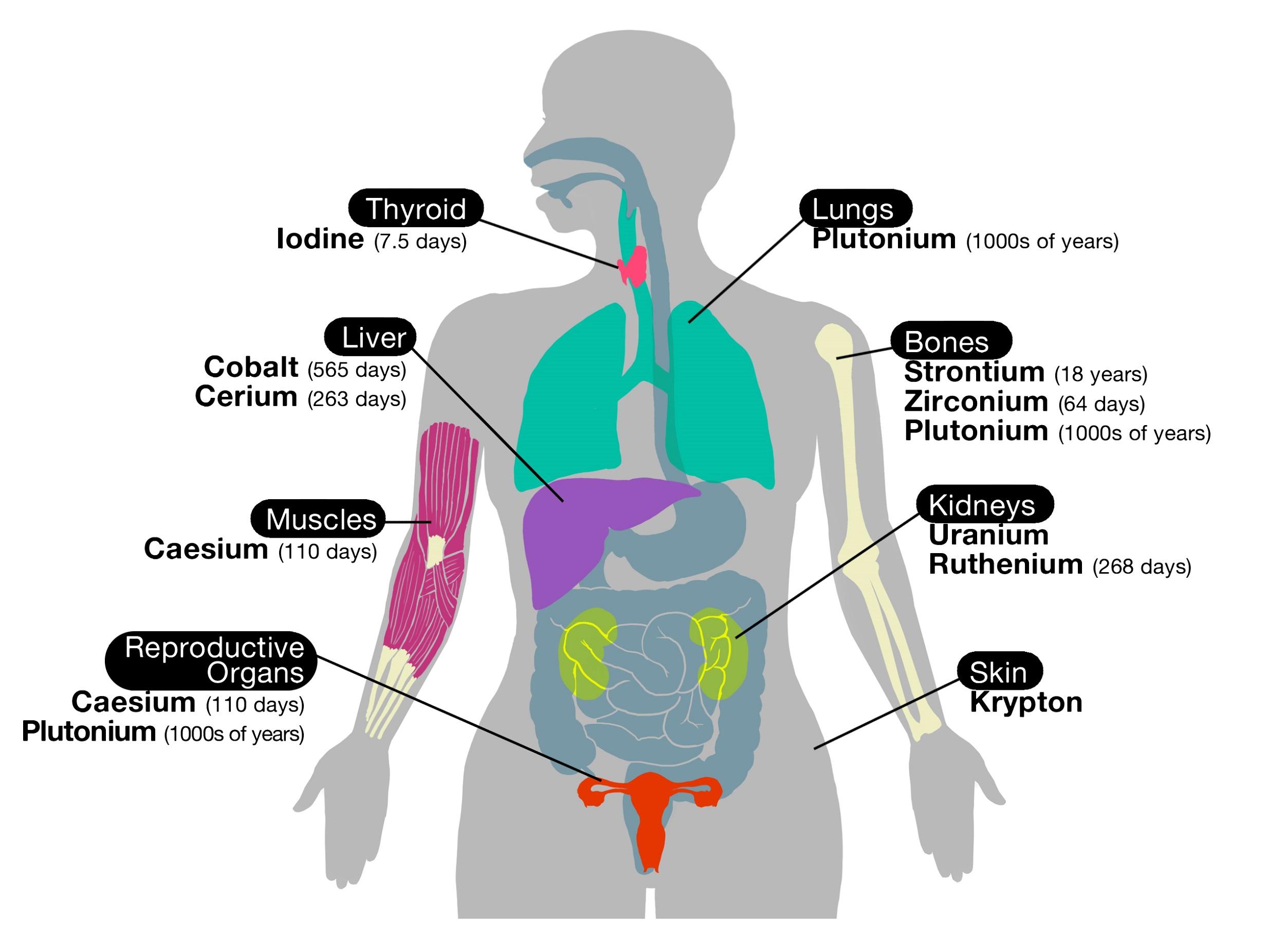 Human Organs Drawing