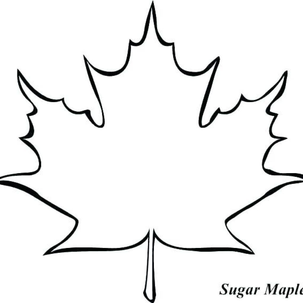 Leaf Outline Drawing