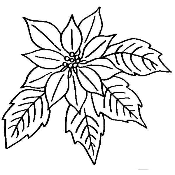 poinsettia drawing outline  free download on clipartmag