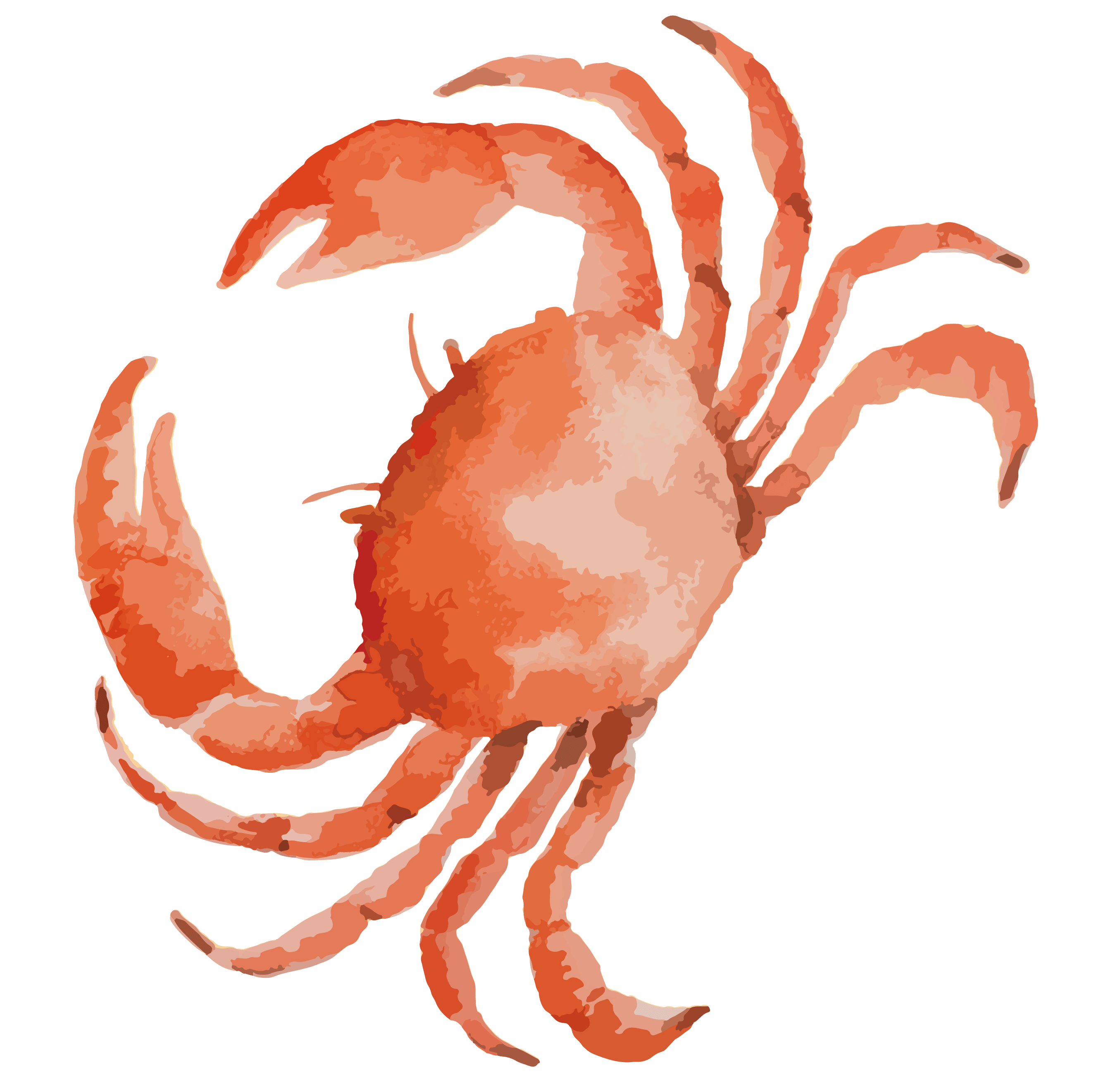 Shellfish Drawing