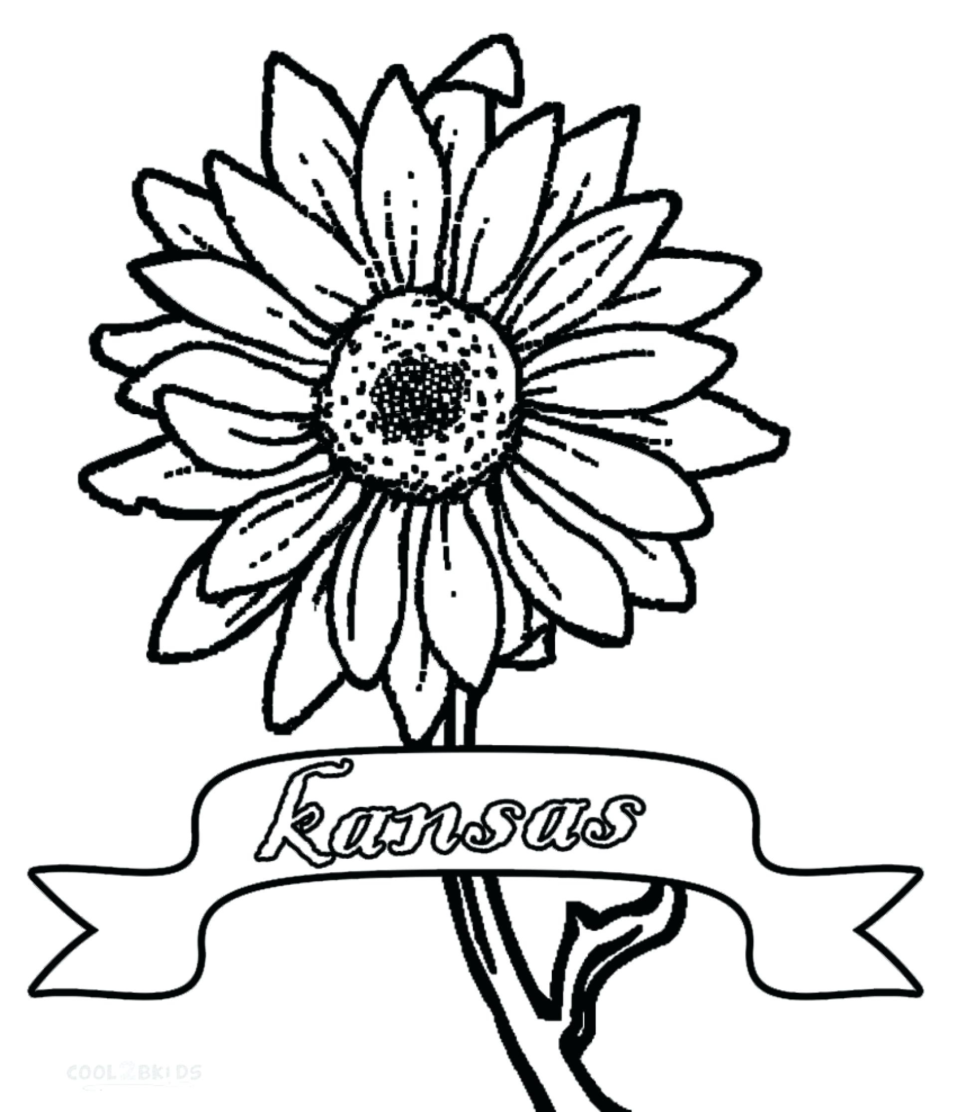 Sunflower Drawing Template