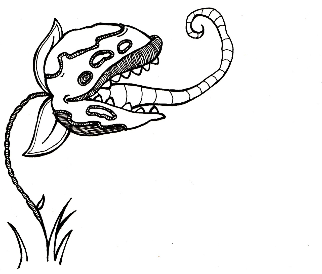 Venus Fly Trap Drawing