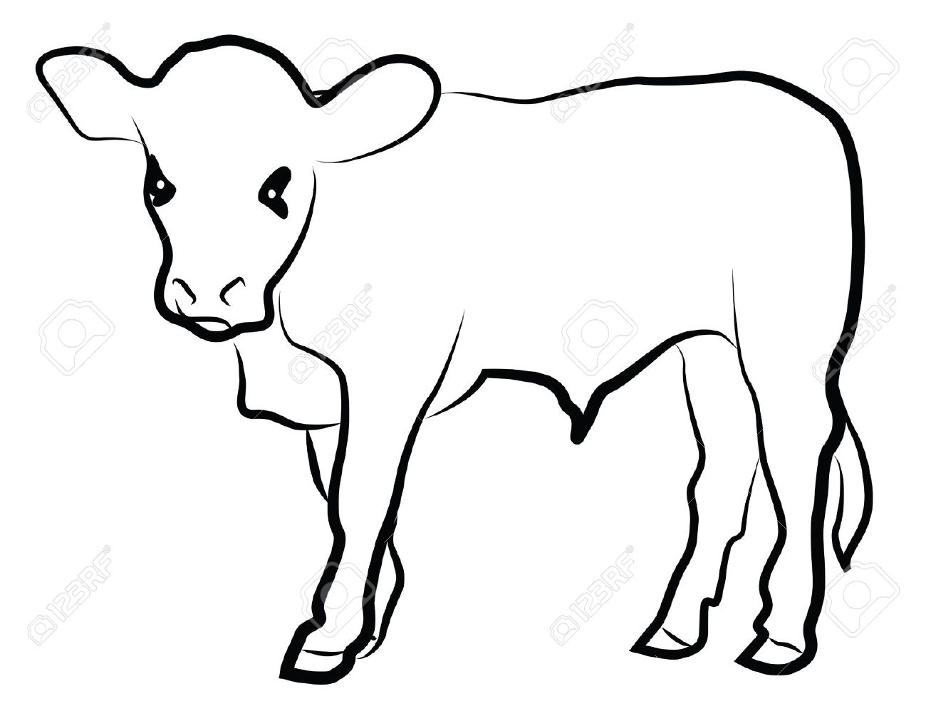 Calf Clipart