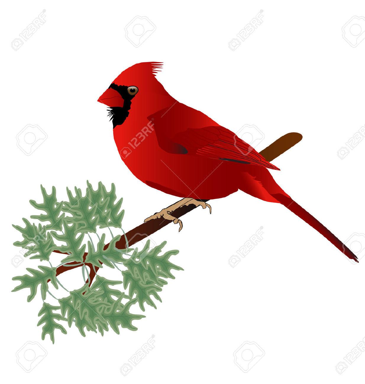 Cartoon Cardinal Clipart