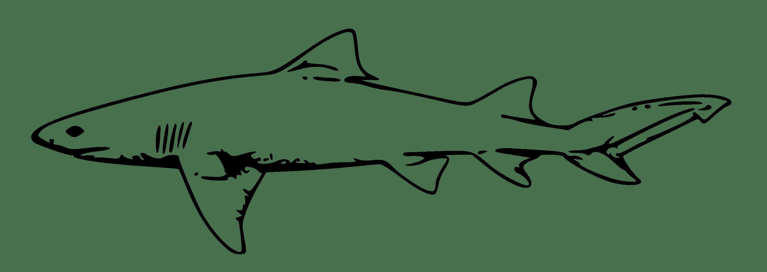 Hammerhead Shark Outline