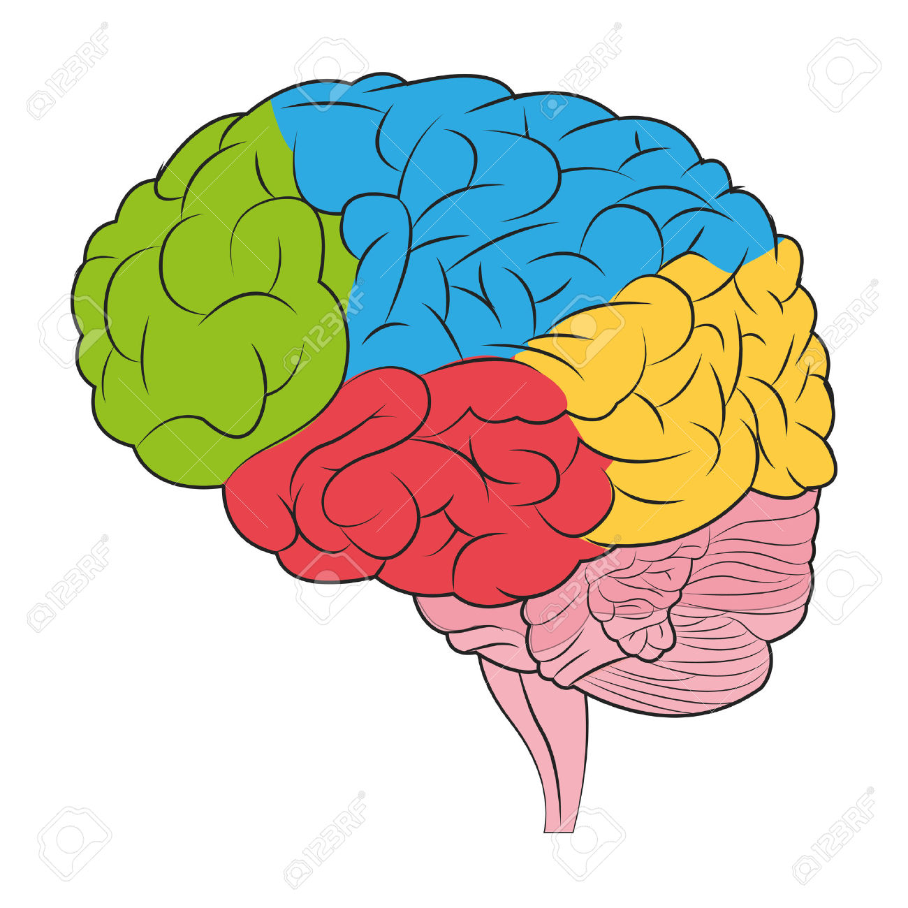Human Brain Clipart   Free download on ClipArtMag (1300 x 1300 Pixel)