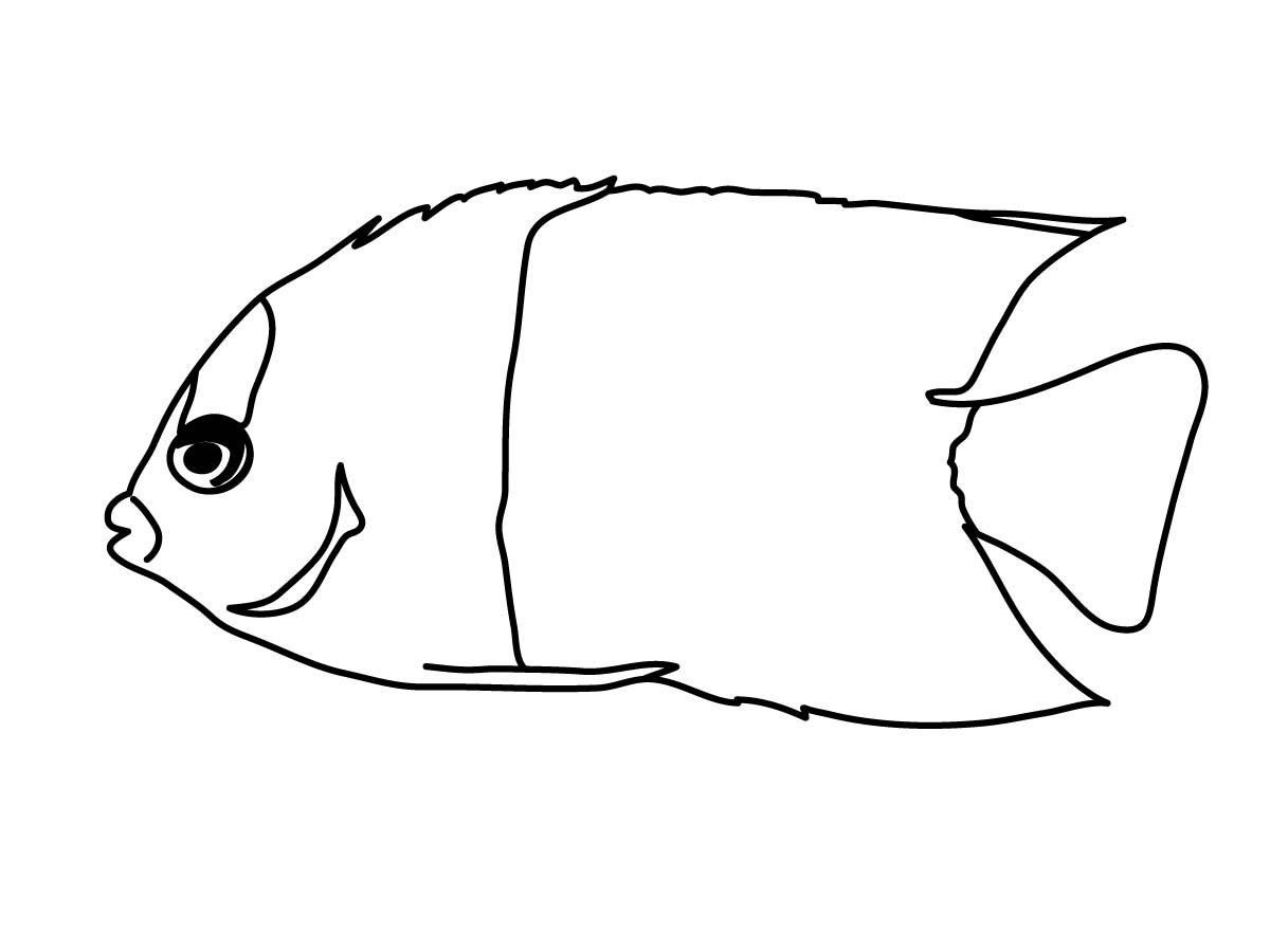Rainbow Fish Outline
