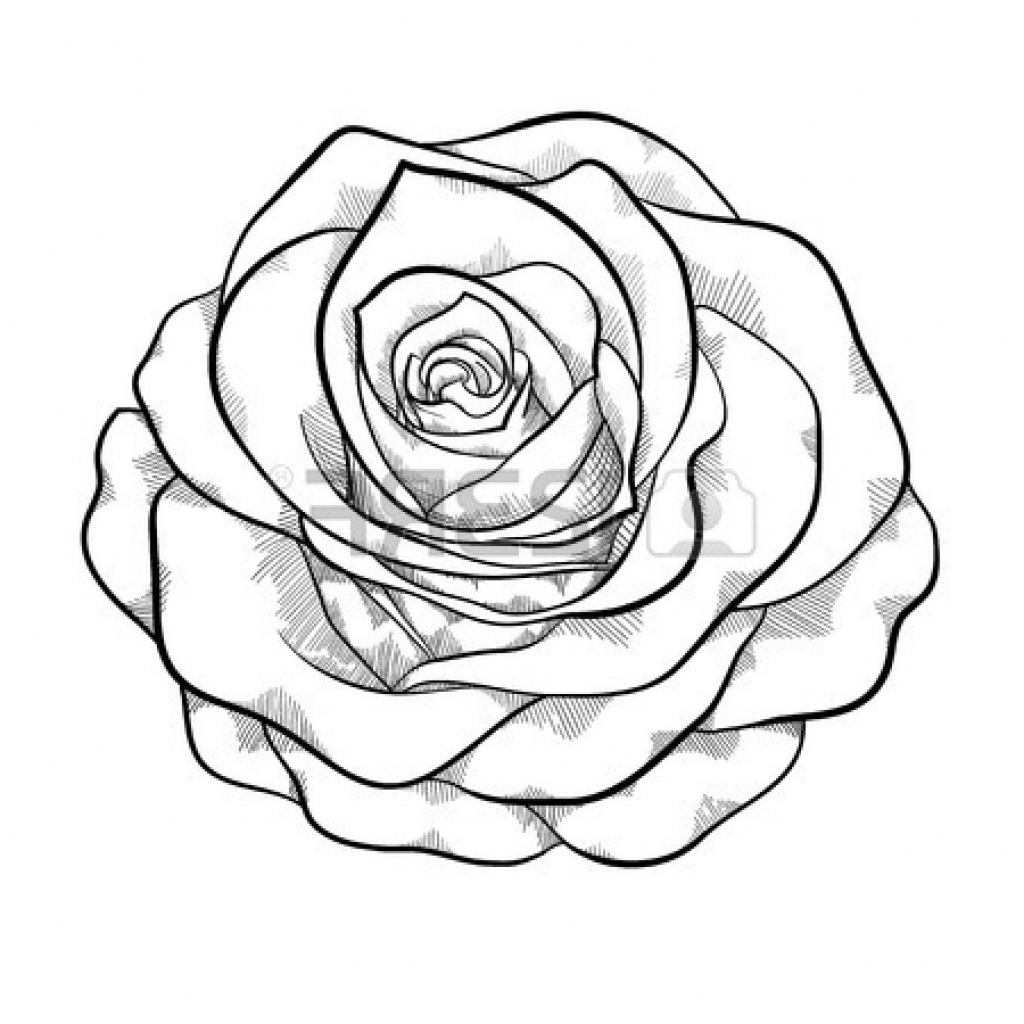 Rose Outline Clipart