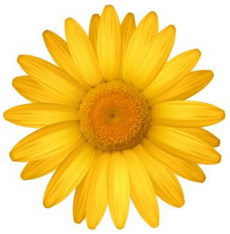 Yellow Daisy Clipart   Free download on ClipArtMag (333 x 339 Pixel)