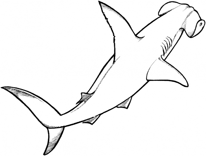 coloring pages nocturnal animals coloring pages night animals