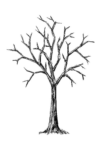 bare tree pictures  cliparts.co