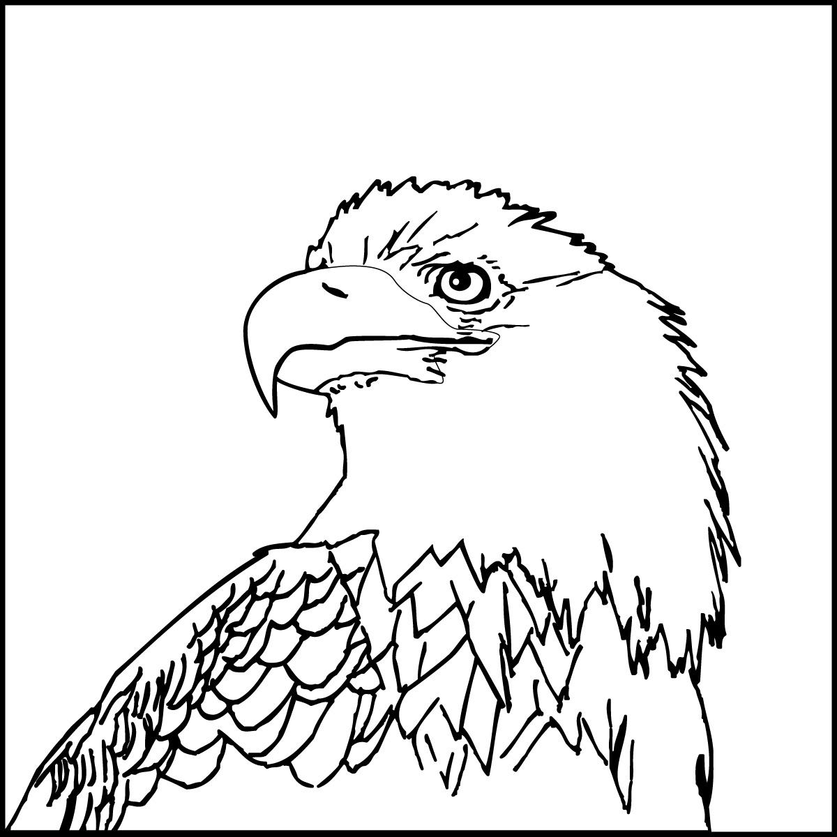 Bald Eagle Outline