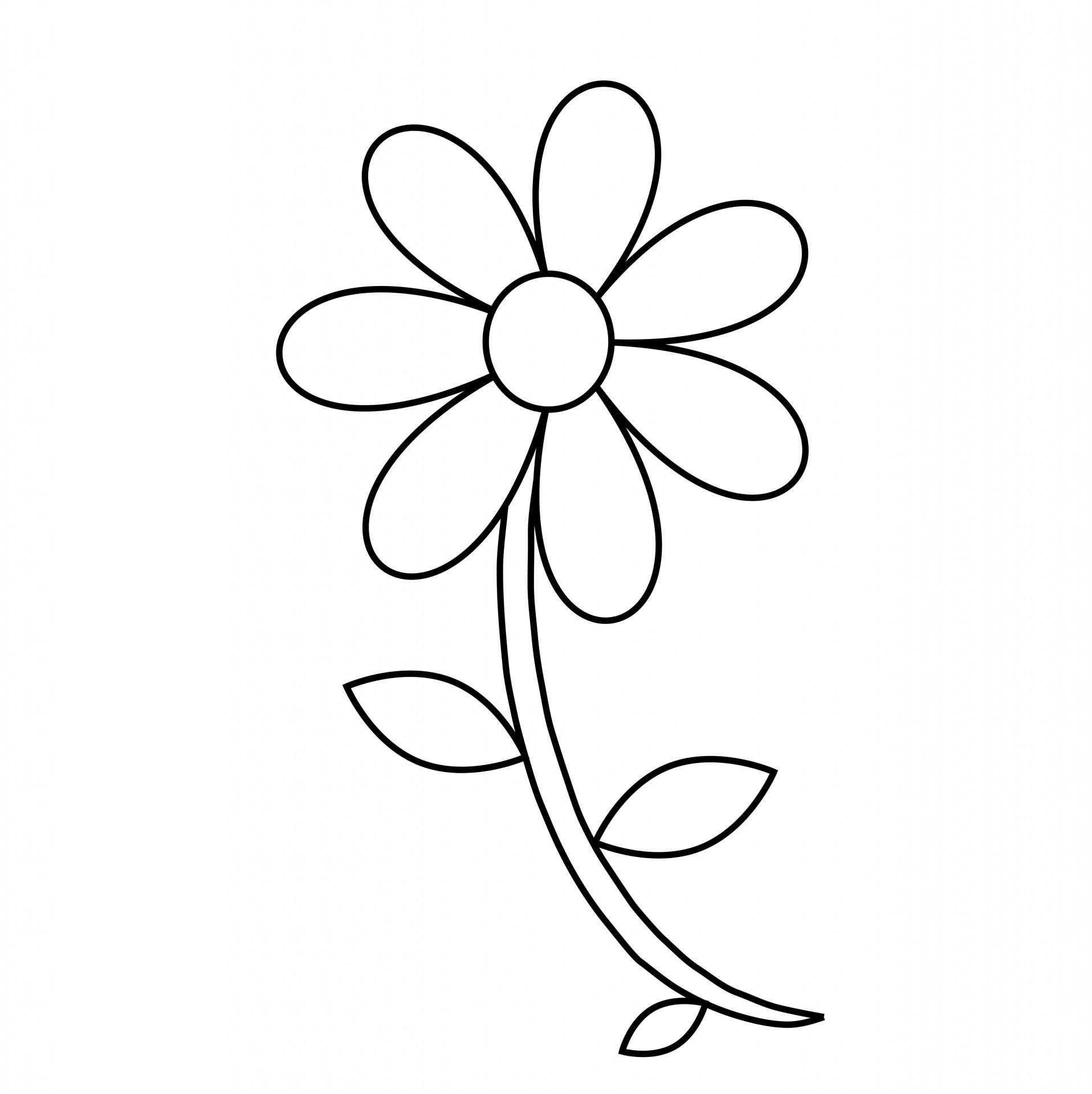 Black And White Flower Outline