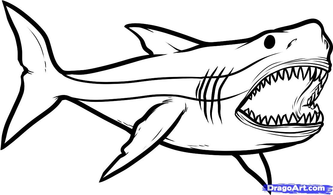 black and white shark pictures cliparts co