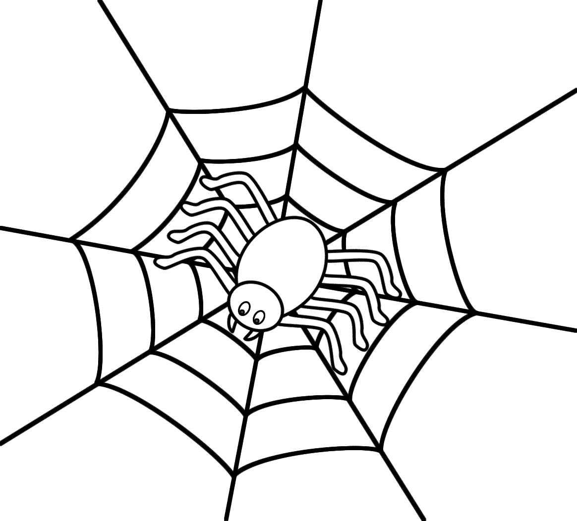 Spider Web Graphic
