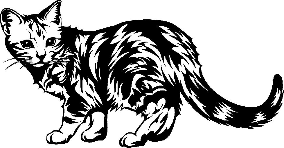 Black Cat Image - Cliparts.co (978 x 512 Pixel)