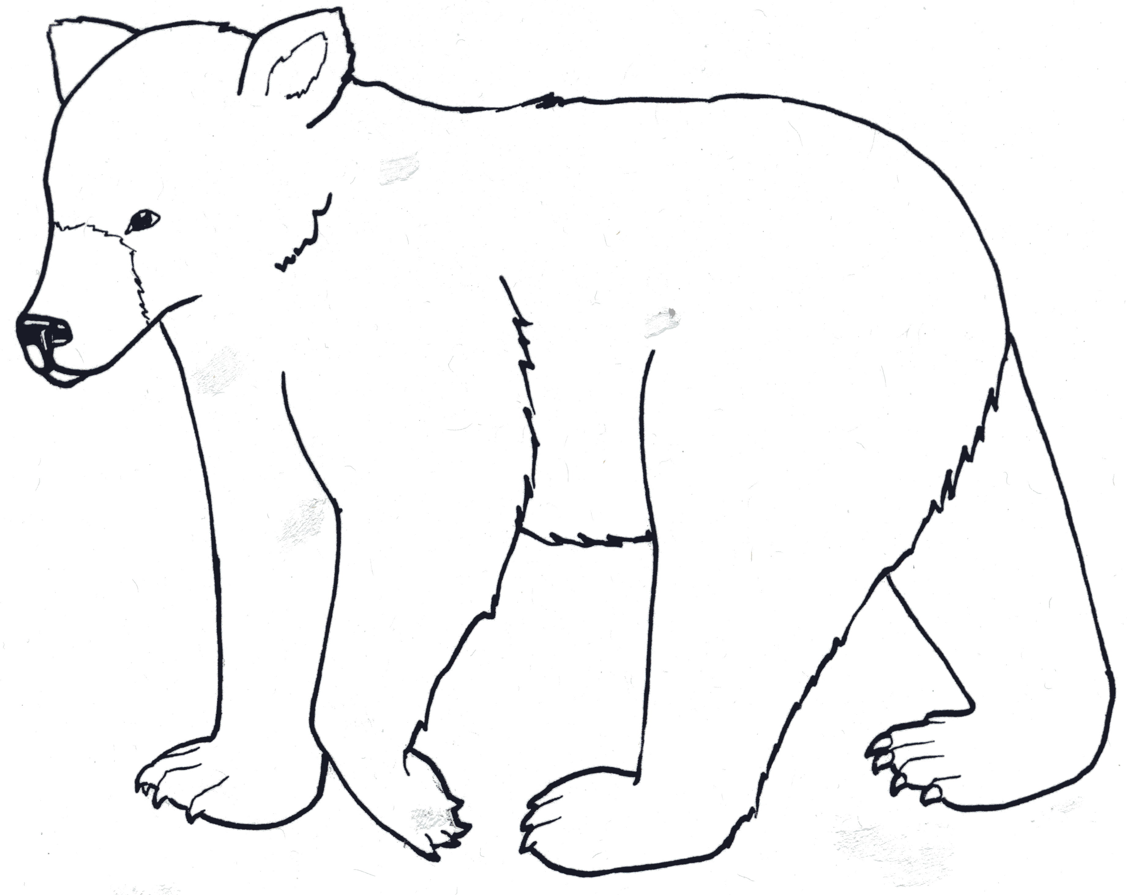 outline of a bear 3682 2923 kids coloring pages printable