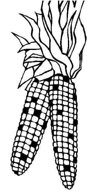 corn stalk coloring page cliparts co