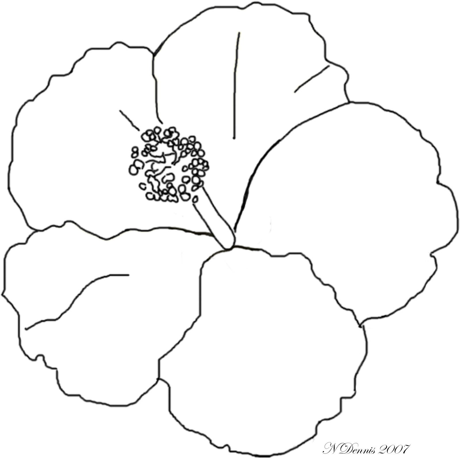 Hibiscus Flower Drawings