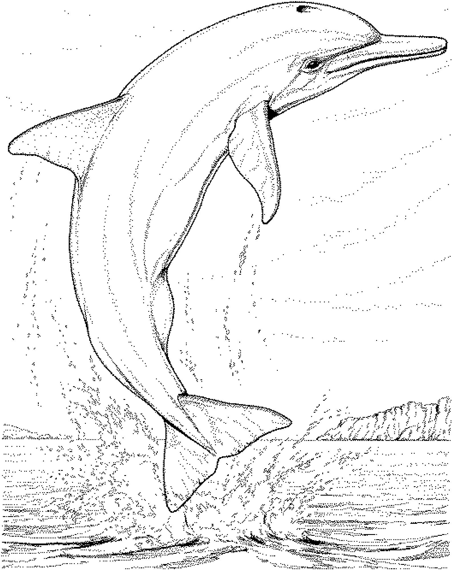 Dolphin Line Drawing