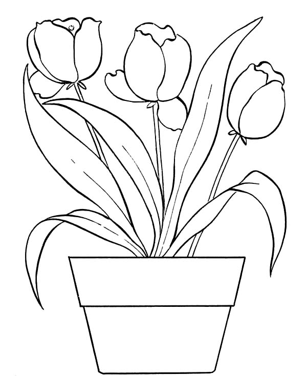 large flower pot coloring page pot leaf coloring pages clipartsco