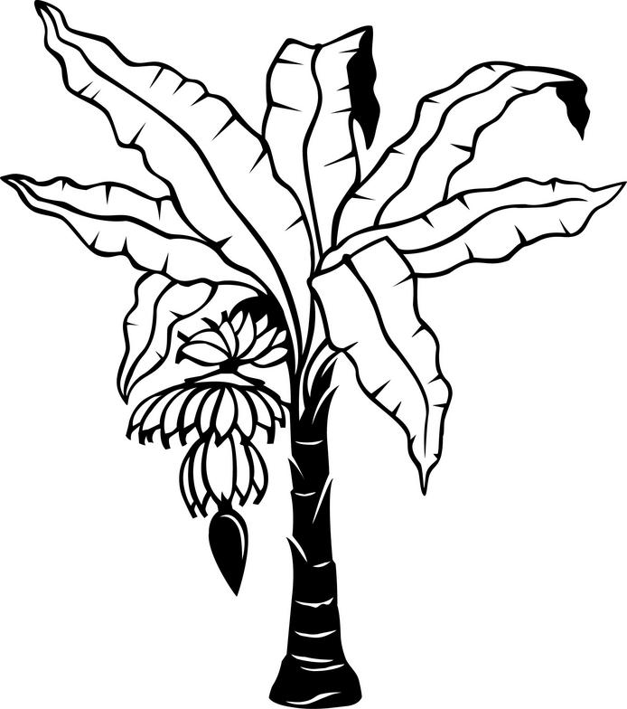 banana tree leaf template colouring pages page 3